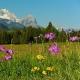 Bergfrühlingswochen 2019 in Krün, Wallgau und Mittenwald