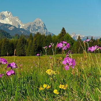 Frühlings Angebote im Karwendel