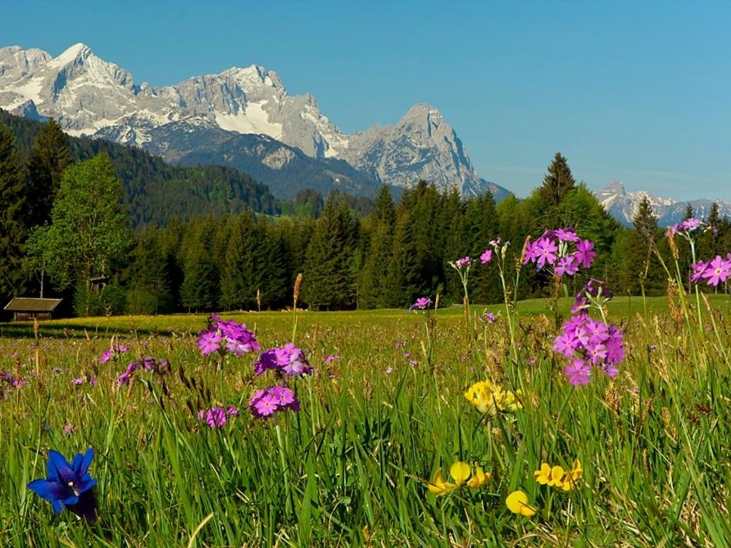 Sommer im Karwendel Blumenwiese bei Krün-Wallgau