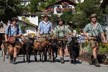 Die Traditionen der Alpen werden in Krün Wallgau noch hoch gehalten. Ziegenabtrieb in Mittenwald, Copyright AWK-Hubert Hornsteiner