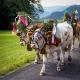 Bauernwochen in der Alpenwelt Karwendel mit Almabtrieb