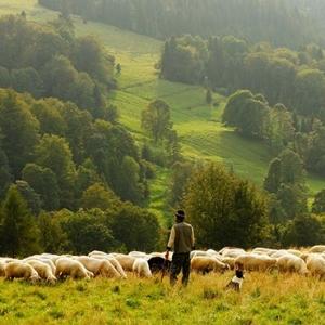 Mittenwald Bauernwochen Almabtrieb der Schafe