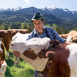 Bergbauer mit seinen Kühen