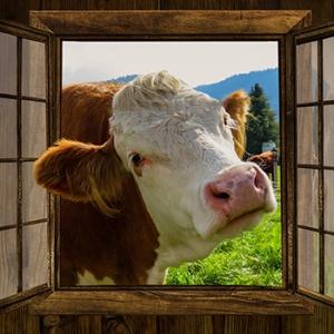 Almabtrieb der Rinder in Wallgau, Krün und Mittenwald
